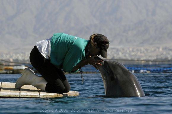 israel dolphin