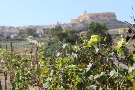 gozo citadel (c) andy mossack
