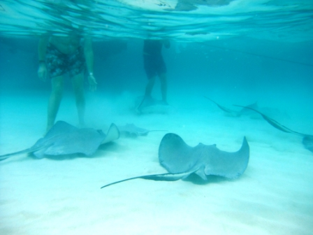 StingRay City (c) Andy Hollis