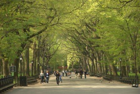 Central Park C Central Park Conservacy