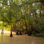 World Land Trust Saves Bornean Rainforest