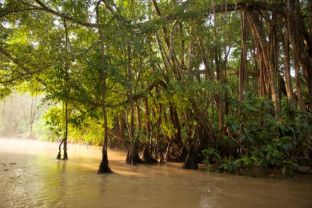 Image Borneo Rainforest