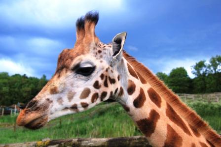 Port Lympne Wildlife Park 009