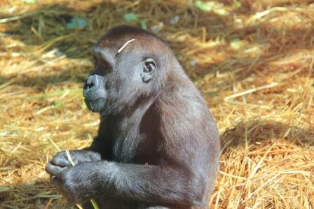 Port Lympne Wildlife Park 085
