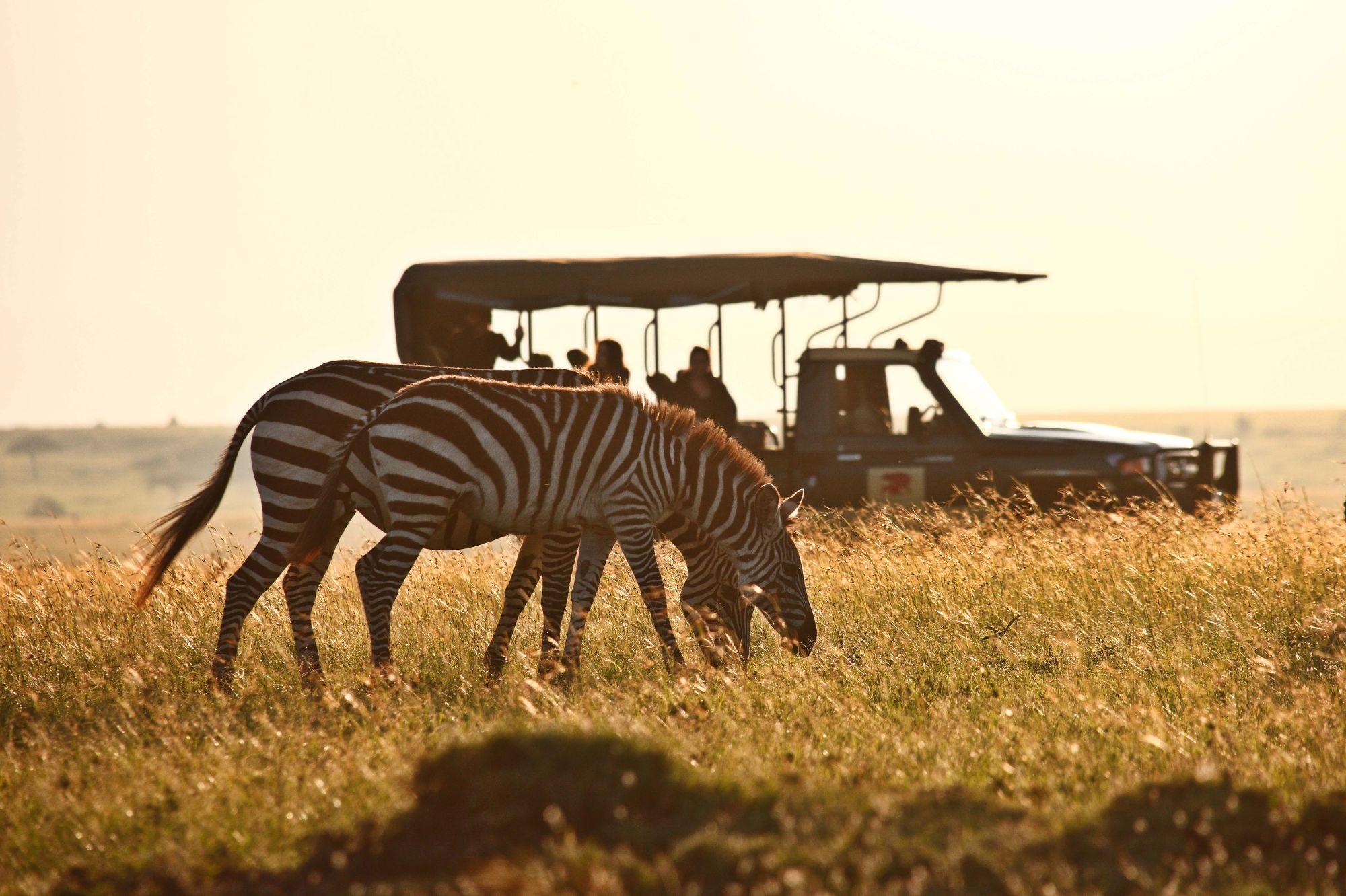 EPC - Game Drive  - Zebra