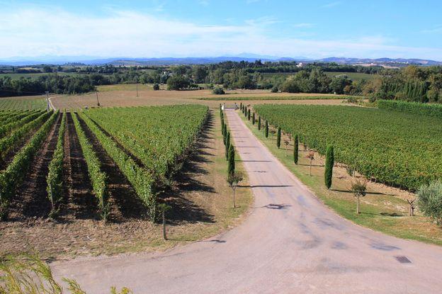 Languedoc wine tasting 049