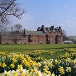 Daffodil time at Cringletie