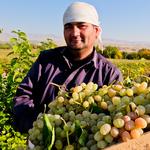 Uzbekistan Wine Route