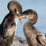 Silversea Galapagos Expedition Cruise