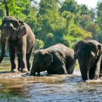 Touring Elephant Centres in Thailand