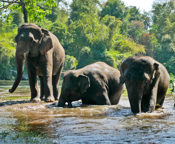Elephants World Three