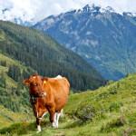 On Foot In The Jungfrau Region, Switzerland