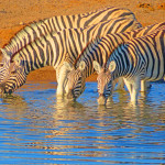 Namibia: The Northern Highlights