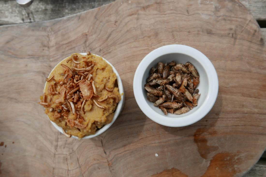 Bug food samples