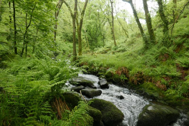 Hidden valley in Cwm Gwaun