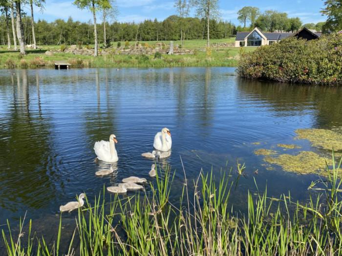 swans Meldrum House